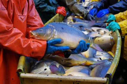Bewerbungsmuster - Fischwirt/in