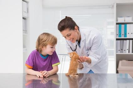 Bewerbungsmuster – Tiermedizinische Fachangestellte