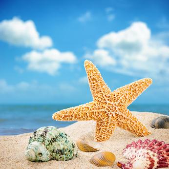 Strand mit Muscheln