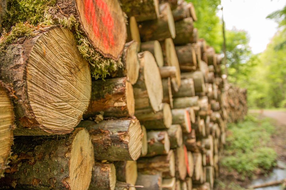 Kostenloses Bewerbungsmuster Forstwirt In